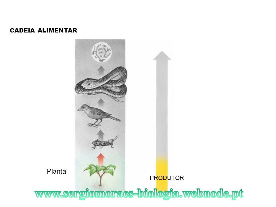 CADEIA ALIMENTAR PRODUTOR Planta