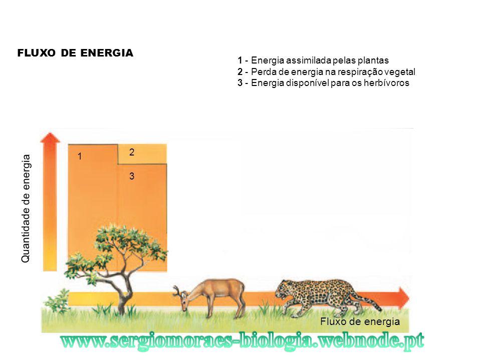 FLUXO DE ENERGIA Fluxo de energia Quantidade de energia 1 2 3 1 - Energia assimilada pelas plantas 2 - Perda de energia na respiração vegetal 3 - Ener