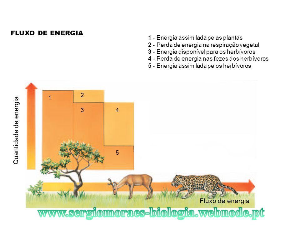 FLUXO DE ENERGIA Fluxo de energia Quantidade de energia 1 2 34 5 1 - Energia assimilada pelas plantas 2 - Perda de energia na respiração vegetal 3 - E