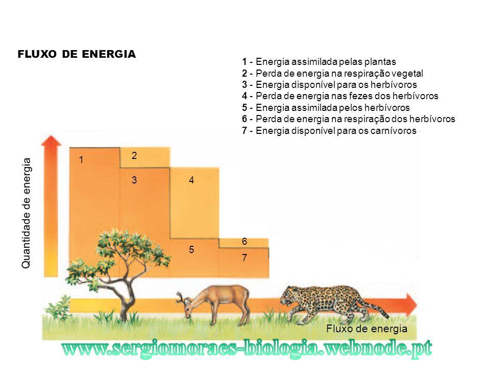 FLUXO DE ENERGIA Fluxo de energia Quantidade de energia 1 2 34 5 7 6 1 - Energia assimilada pelas plantas 2 - Perda de energia na respiração vegetal 3