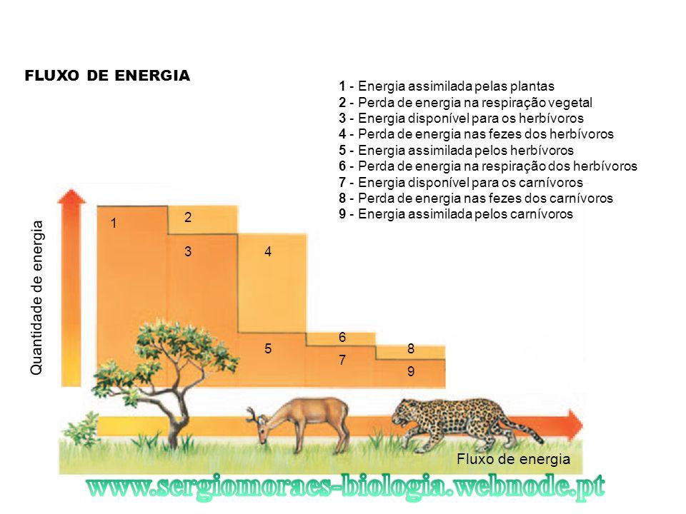 FLUXO DE ENERGIA Fluxo de energia 1 2 34 5 7 6 9 8 1 - Energia assimilada pelas plantas 2 - Perda de energia na respiração vegetal 3 - Energia disponí
