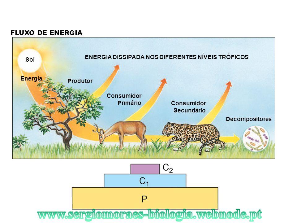 FLUXO DE ENERGIA Sol Energia Produtor ENERGIA DISSIPADA NOS DIFERENTES NÍVEIS TRÓFICOS Consumidor Primário Consumidor Secundário Decompositores