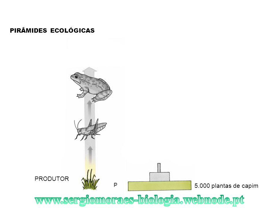 PIRÂMIDES ECOLÓGICAS PRODUTOR 5.000 plantas de capim P