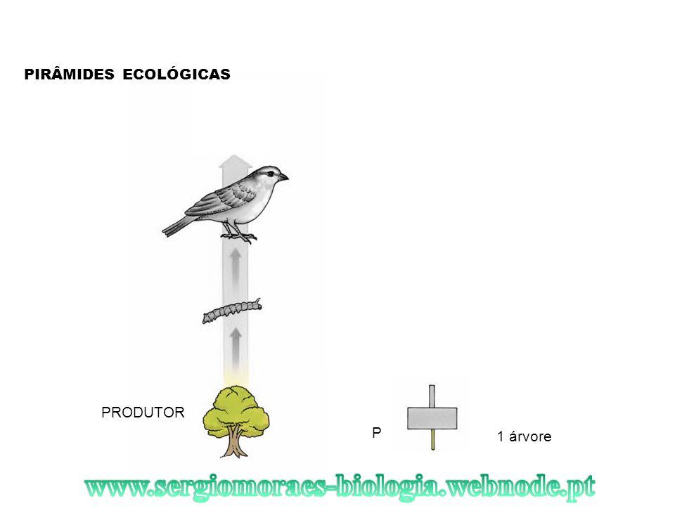 PIRÂMIDES ECOLÓGICAS PRODUTOR 1 árvore P
