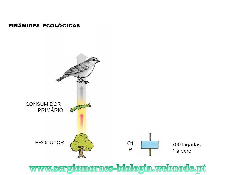 PIRÂMIDES ECOLÓGICAS PRODUTOR 1 árvore 700 lagartas CONSUMIDOR PRIMÁRIO C1 P