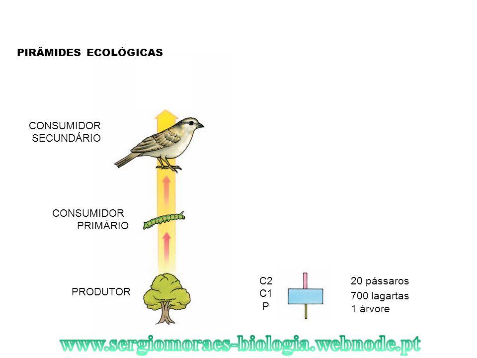 PIRÂMIDES ECOLÓGICAS PRODUTOR CONSUMIDOR PRIMÁRIO CONSUMIDOR SECUNDÁRIO 20 pássaros 1 árvore 700 lagartas C2 C1 P