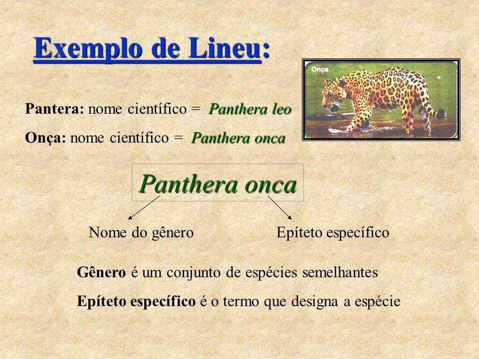 Exemplo de Lineu: Panthera leo Pantera: nome científico = Panthera leo Panthera onca Onça: nome científico = Panthera onca Panthera onca Nome do gêner