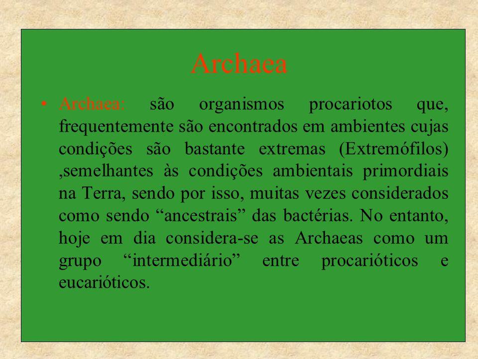 Archaea Archaea: são organismos procariotos que, frequentemente são encontrados em ambientes cujas condições são bastante extremas (Extremófilos),seme