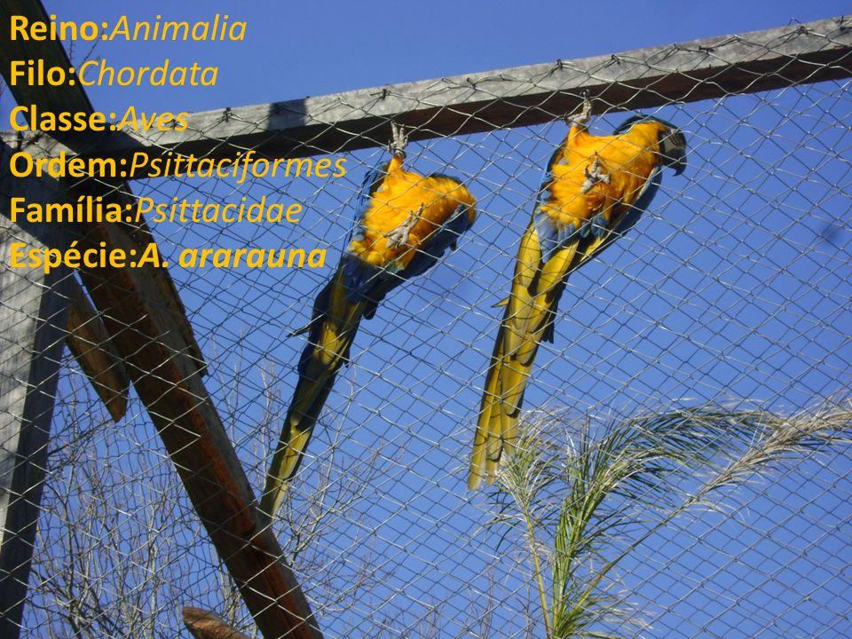 Reino:Animalia Filo:Chordata Classe:Aves Ordem:Psittaciformes Família:Psittacidae Espécie:A. ararauna