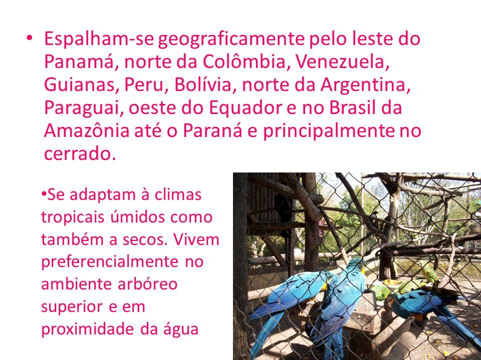 Espalham-se geograficamente pelo leste do Panamá, norte da Colômbia, Venezuela, Guianas, Peru, Bolívia, norte da Argentina, Paraguai, oeste do Equador