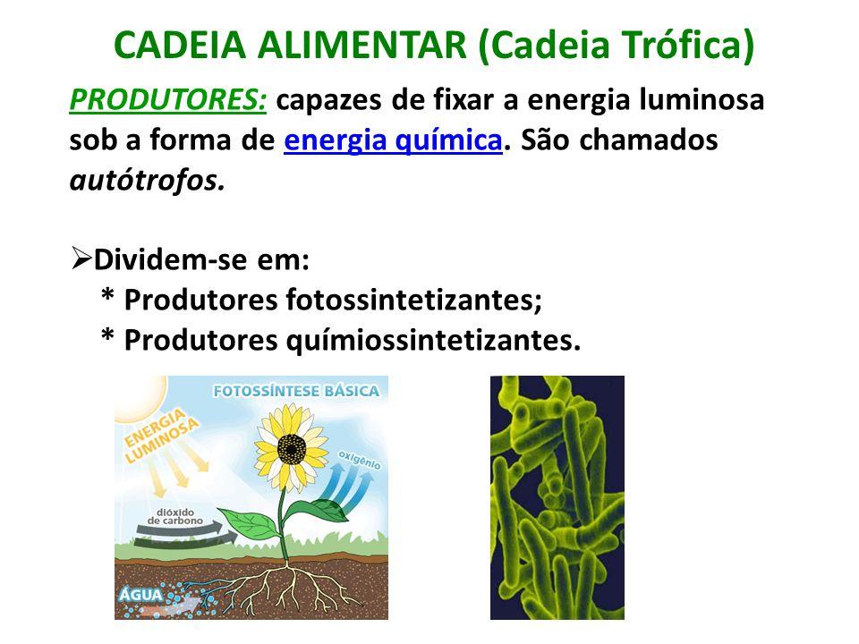 CADEIA ALIMENTAR (Cadeia Trófica) PRODUTORES: capazes de fixar a energia luminosa sob a forma de energia química. São chamados autótrofos.energia quím