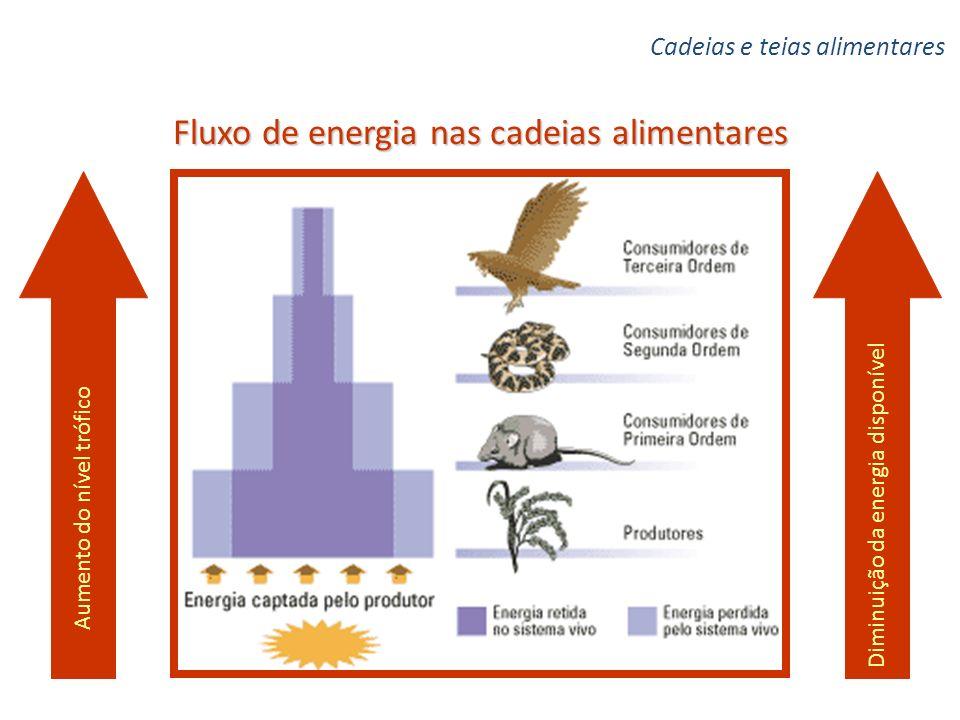 Fluxo de energia nas cadeias alimentares Aumento do nível trófico Diminuição da energia disponível Cadeias e teias alimentares