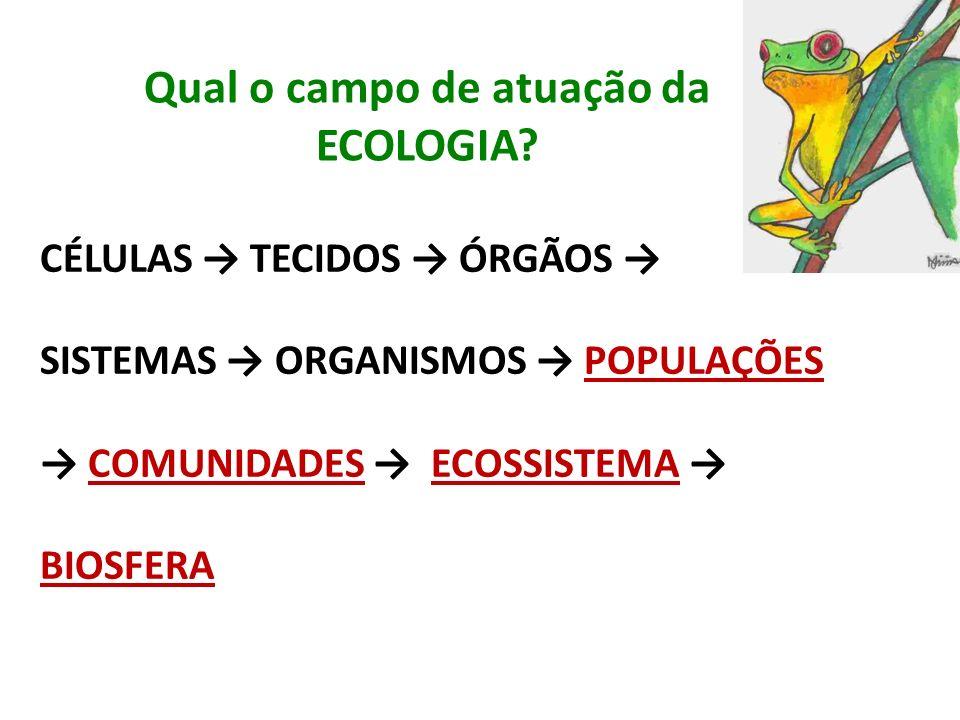 Qual o campo de atuação da ECOLOGIA? CÉLULAS TECIDOS ÓRGÃOS SISTEMAS ORGANISMOS POPULAÇÕES COMUNIDADES ECOSSISTEMA BIOSFERA