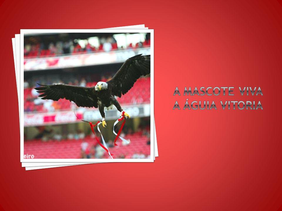 O símbolo do clube é uma águia que surge por cima de uma roda de bicicleta, e do escudo vermelho e branco. A mascote do Benfica é também ela uma águia