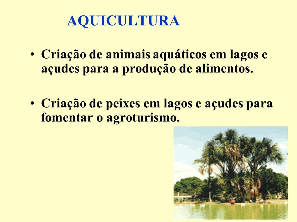 AQUICULTURA Criação de animais aquáticos em lagos e açudes para a produção de alimentos. Criação de peixes em lagos e açudes para fomentar o agroturis