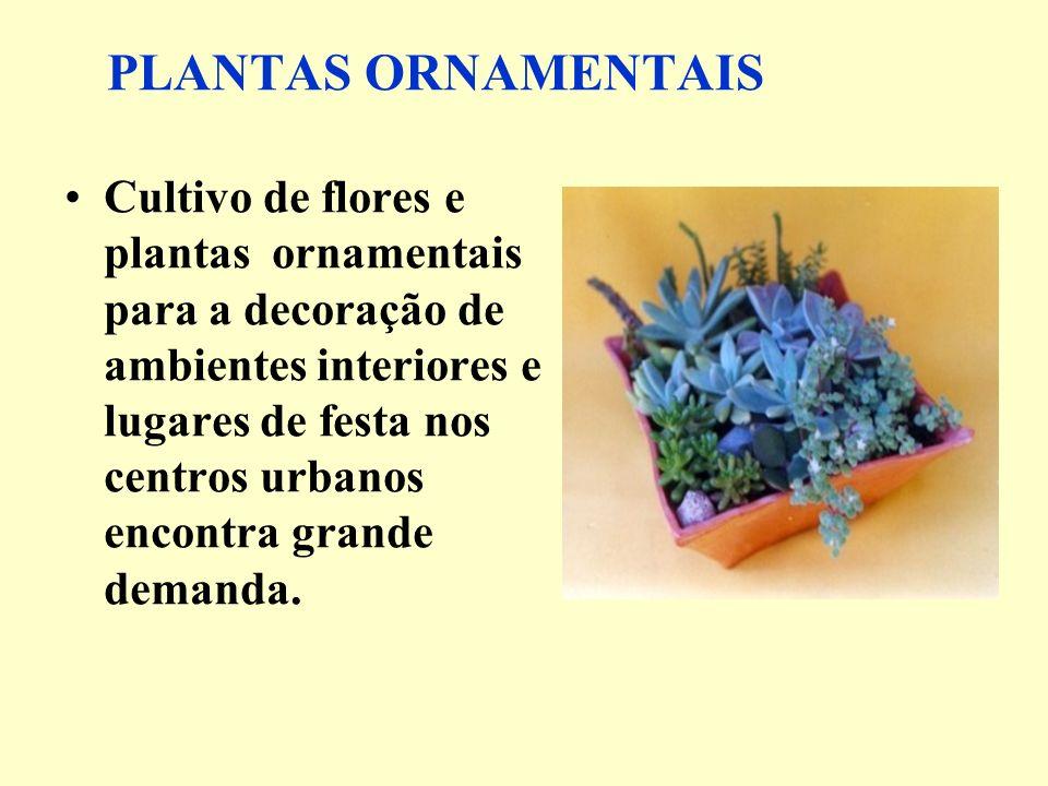 PLANTAS ORNAMENTAIS Cultivo de flores e plantas ornamentais para a decoração de ambientes interiores e lugares de festa nos centros urbanos encontra g