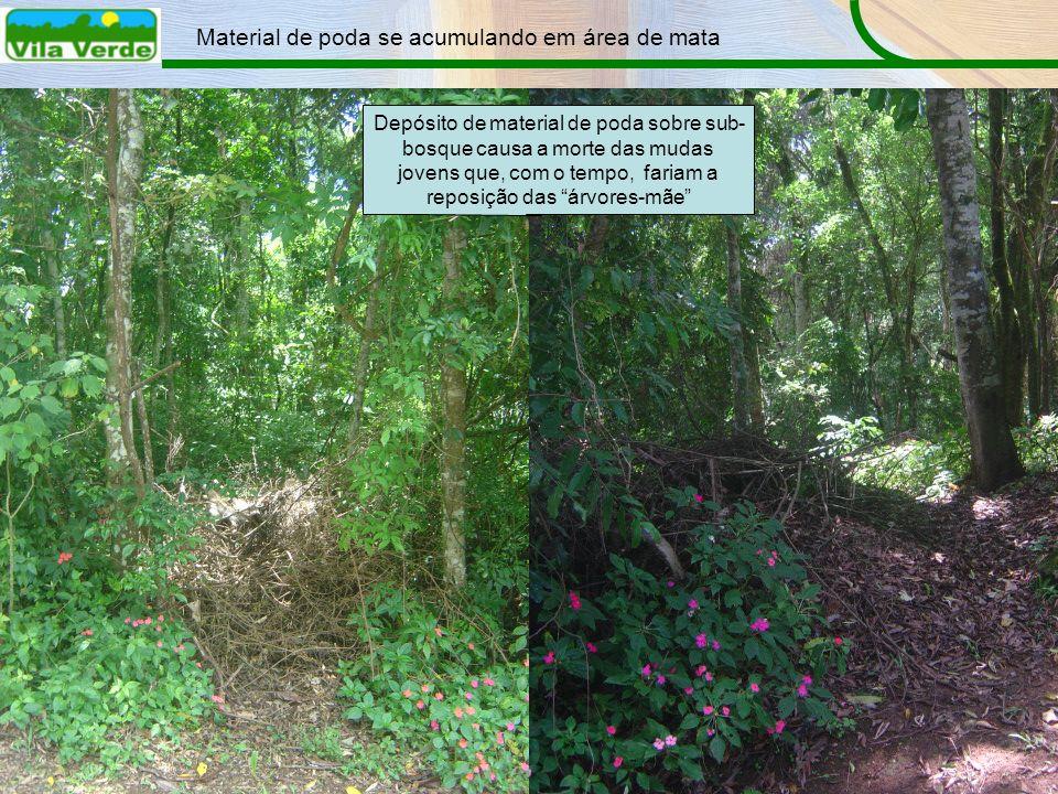 Material de poda se acumulando em área de mata Depósito de material de poda sobre sub- bosque causa a morte das mudas jovens que, com o tempo, fariam