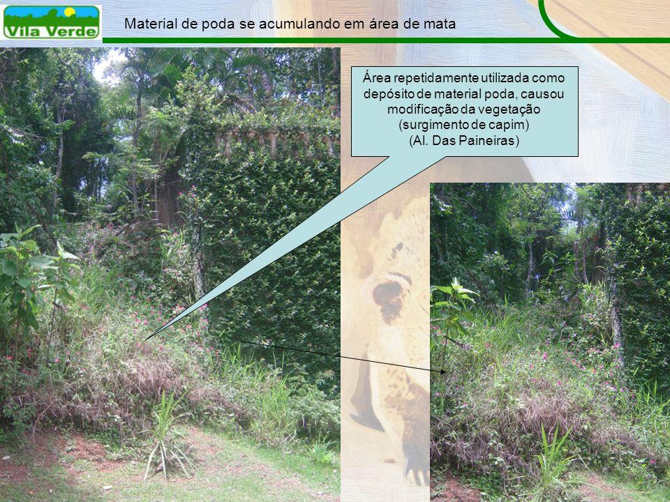 Material de poda se acumulando em área de mata Área repetidamente utilizada como depósito de material poda, causou modificação da vegetação (surgiment
