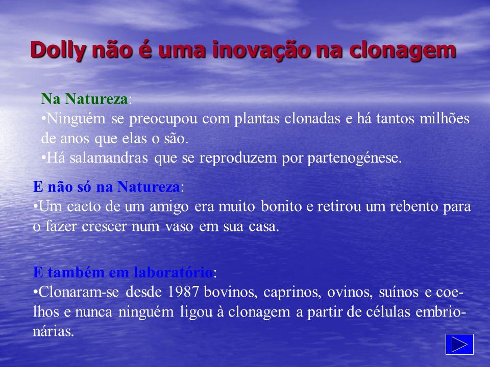 Dolly não é uma inovação na clonagem Na Natureza: Ninguém se preocupou com plantas clonadas e há tantos milhões de anos que elas o são. Há salamandras