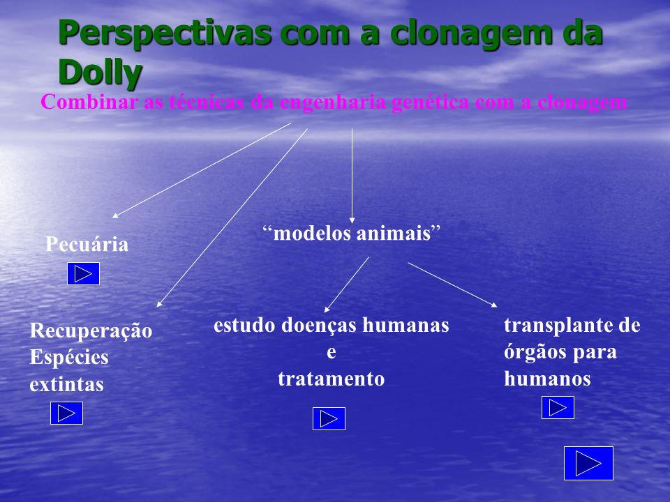 Perspectivas com a clonagem da Dolly Combinar as técnicas da engenharia genética com a clonagem Pecuária Recuperação Espécies extintas modelos animais