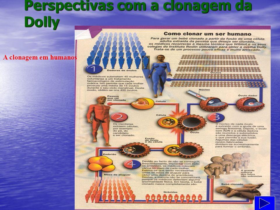 Perspectivas com a clonagem da Dolly A clonagem em humanos