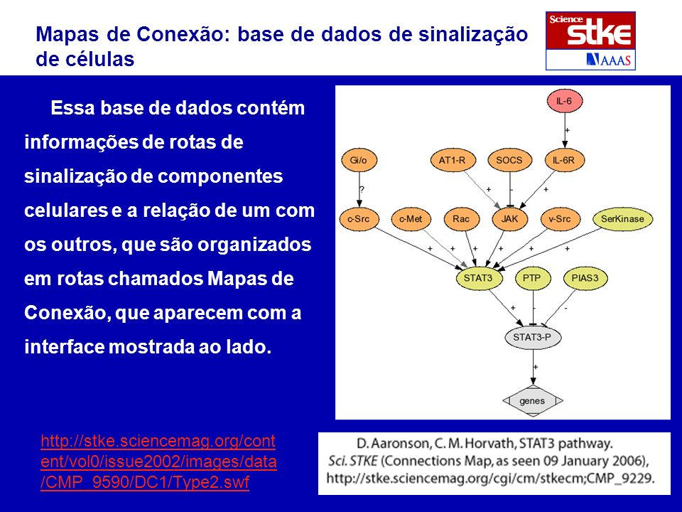 Essa base de dados contém informações de rotas de sinalização de componentes celulares e a relação de um com os outros, que são organizados em rotas chamados Mapas de Conexão, que aparecem com a interface mostrada ao lado.