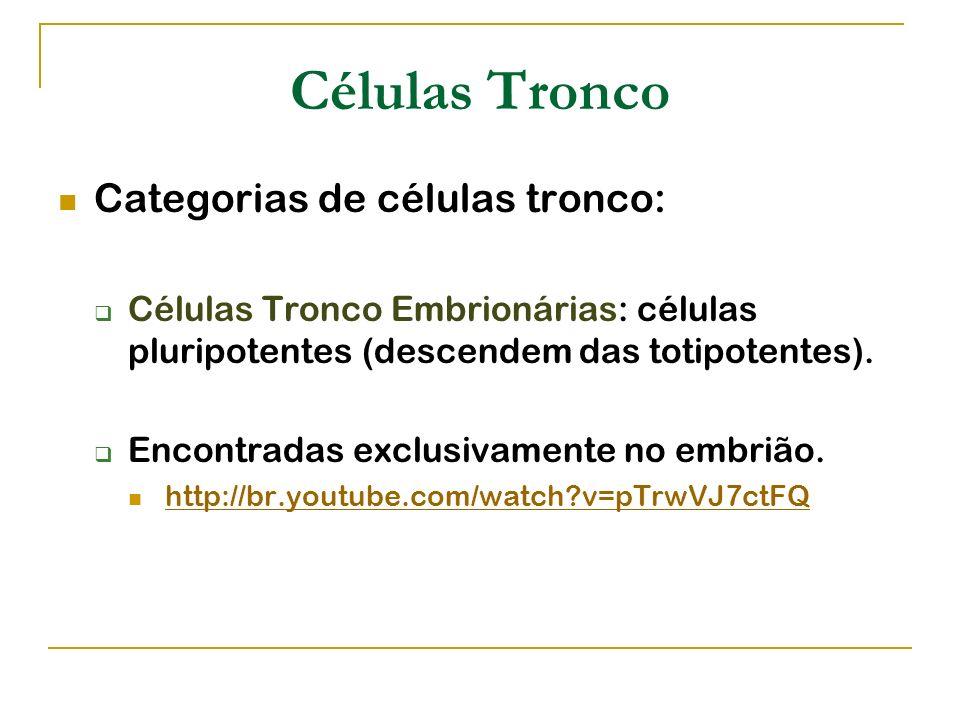 Células Tronco Categorias de células tronco: Células Tronco Embrionárias: células pluripotentes (descendem das totipotentes). Encontradas exclusivamen