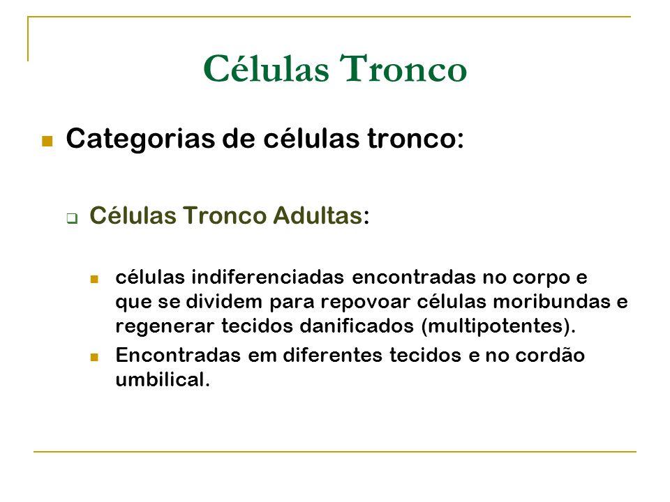 Células Tronco Categorias de células tronco: Células Tronco Adultas: células indiferenciadas encontradas no corpo e que se dividem para repovoar célul