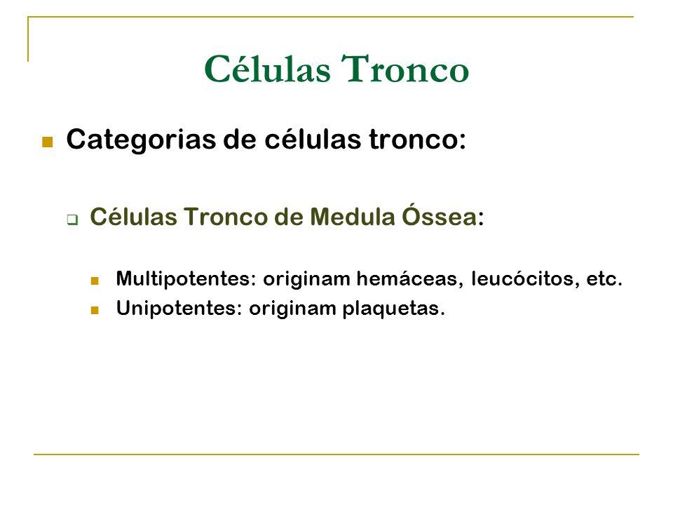 Células Tronco Categorias de células tronco: Células Tronco de Medula Óssea: Multipotentes: originam hemáceas, leucócitos, etc. Unipotentes: originam
