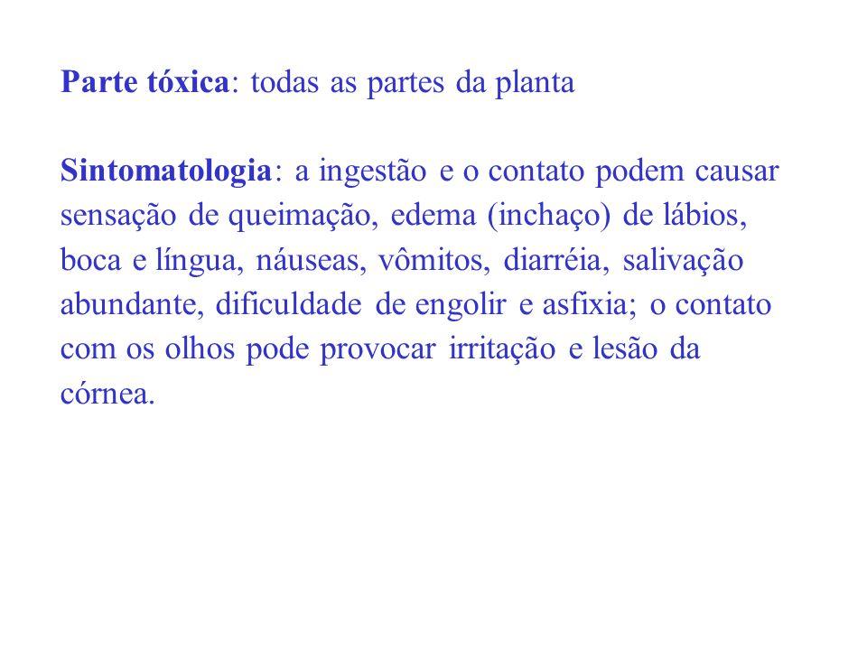 Parte tóxica: todas as partes da planta Sintomatologia: a ingestão e o contato podem causar sensação de queimação, edema (inchaço) de lábios, boca e l