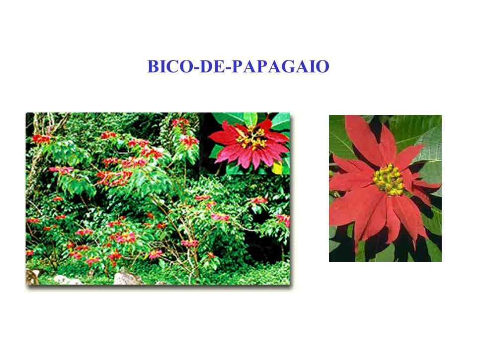 BICO-DE-PAPAGAIO