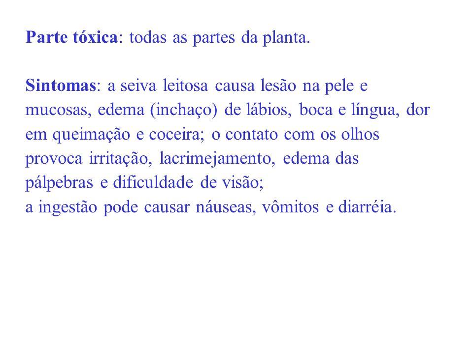 Parte tóxica: todas as partes da planta. Sintomas: a seiva leitosa causa lesão na pele e mucosas, edema (inchaço) de lábios, boca e língua, dor em que