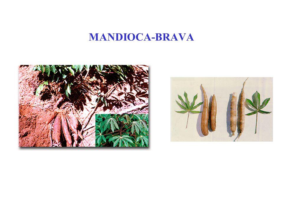 MANDIOCA-BRAVA