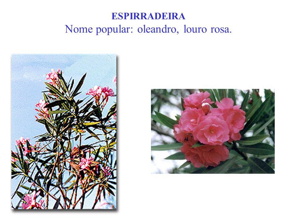 ESPIRRADEIRA Nome popular: oleandro, louro rosa.