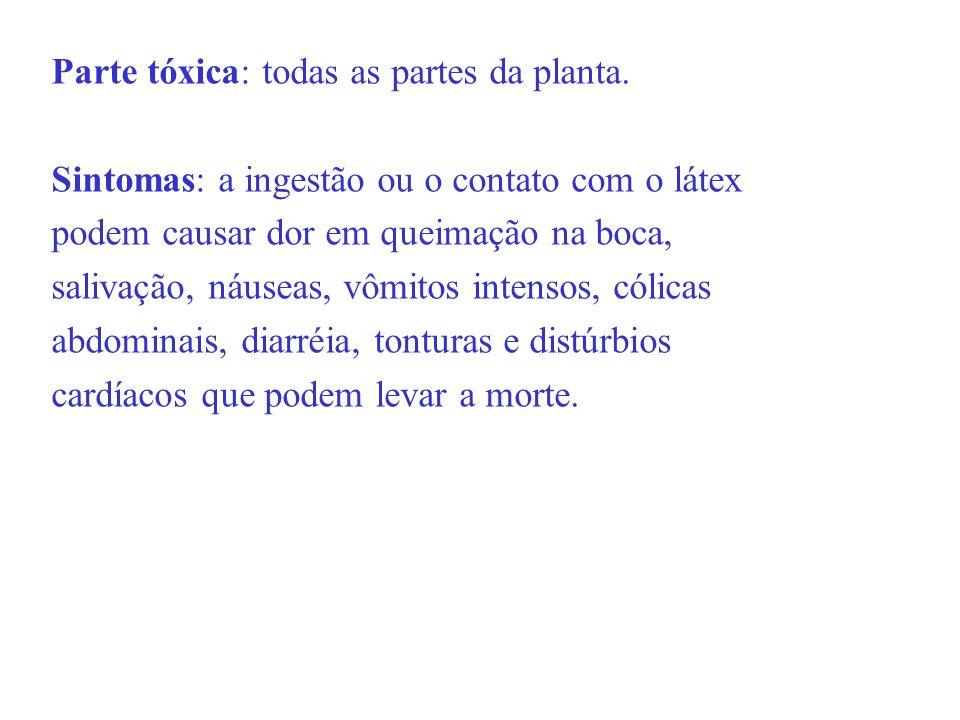Parte tóxica: todas as partes da planta. Sintomas: a ingestão ou o contato com o látex podem causar dor em queimação na boca, salivação, náuseas, vômi