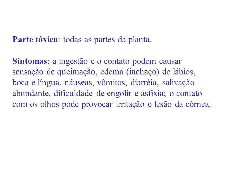 Parte tóxica: todas as partes da planta. Sintomas: a ingestão e o contato podem causar sensação de queimação, edema (inchaço) de lábios, boca e língua