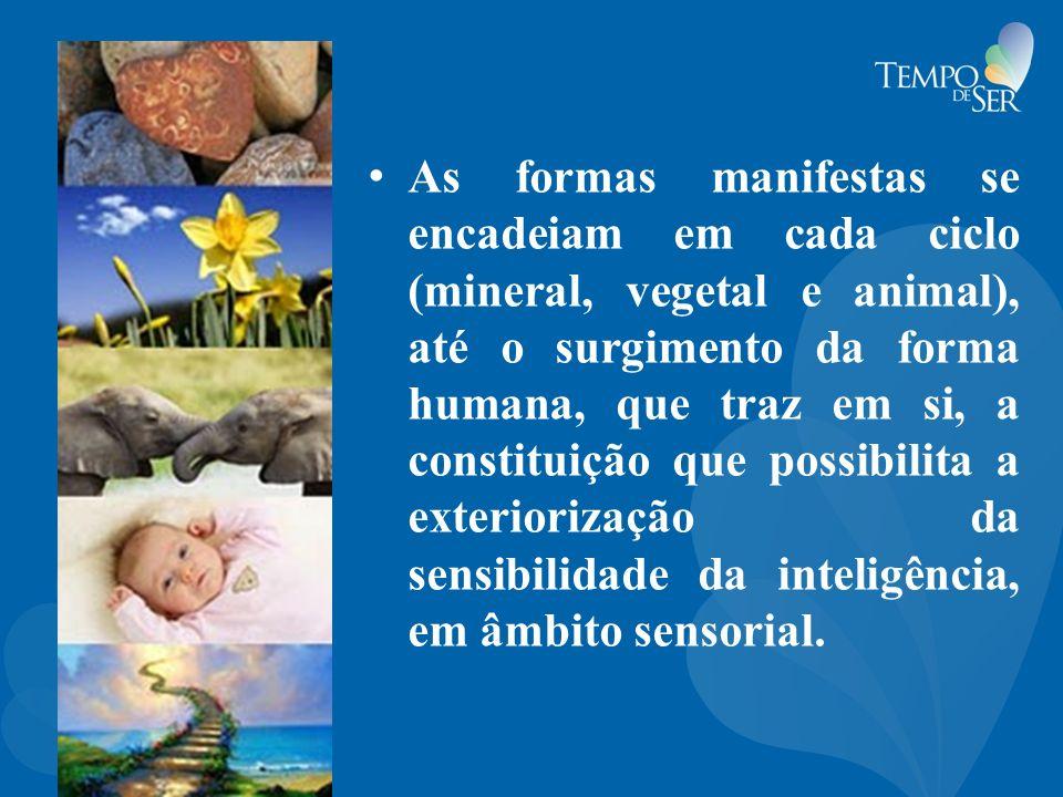 As formas manifestas se encadeiam em cada ciclo (mineral, vegetal e animal), até o surgimento da forma humana, que traz em si, a constituição que poss