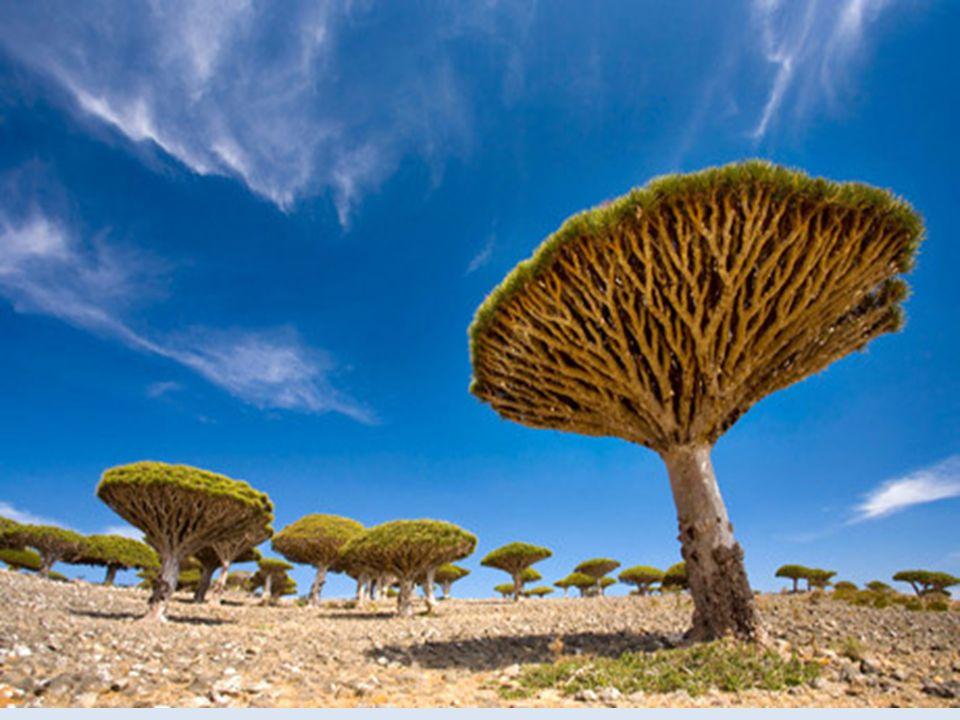 Ilha Socotra – Oceano Índico Essa ilha simplesmente dispensa qualquer noção do que é considerado normal para uma paisagem terrestre. Se você acordasse