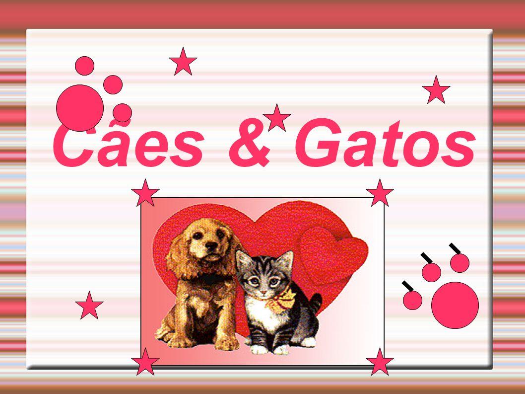 Amigo leitor, A Edição número 001 da revista Cães & Gatos chegou para acabar com seus problemas...