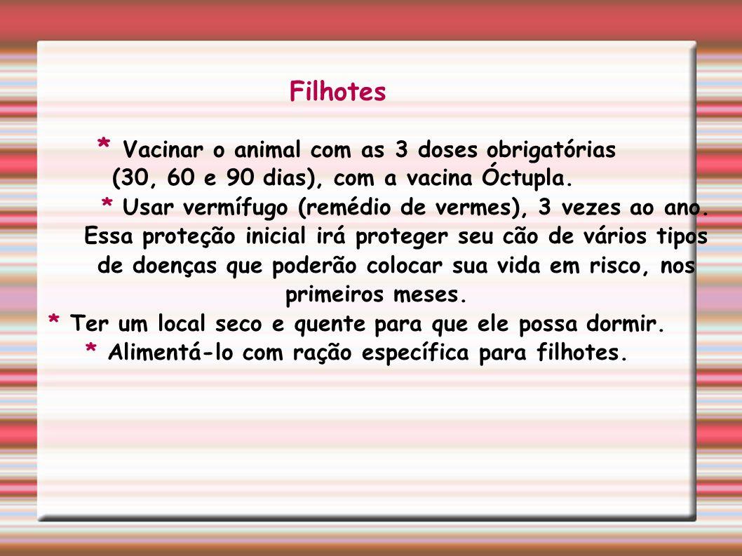 Adultos * Vacinação anual (óctupla), que protege o animal contra 8 tipos de doenças.