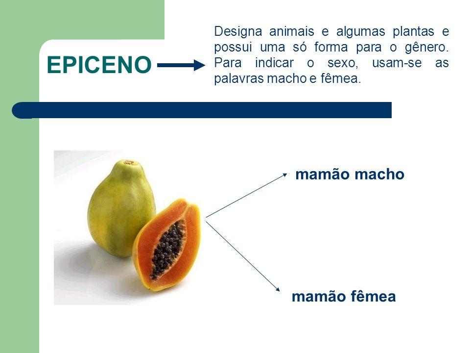 EPICENO Designa animais e algumas plantas e possui uma só forma para o gênero.