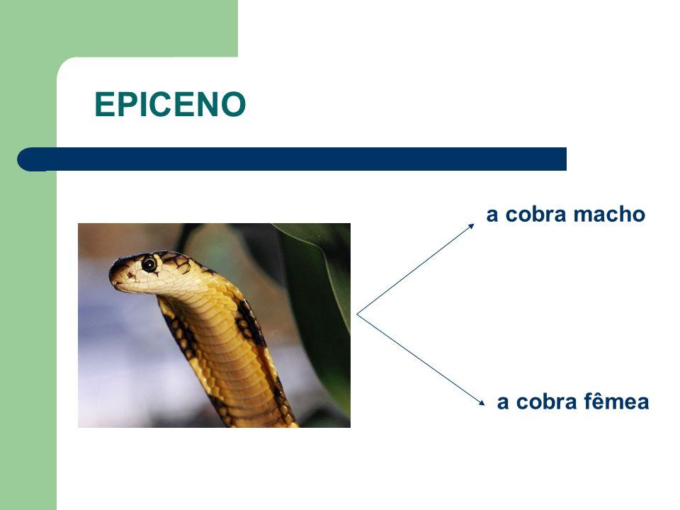 a cobra macho a cobra fêmea EPICENO