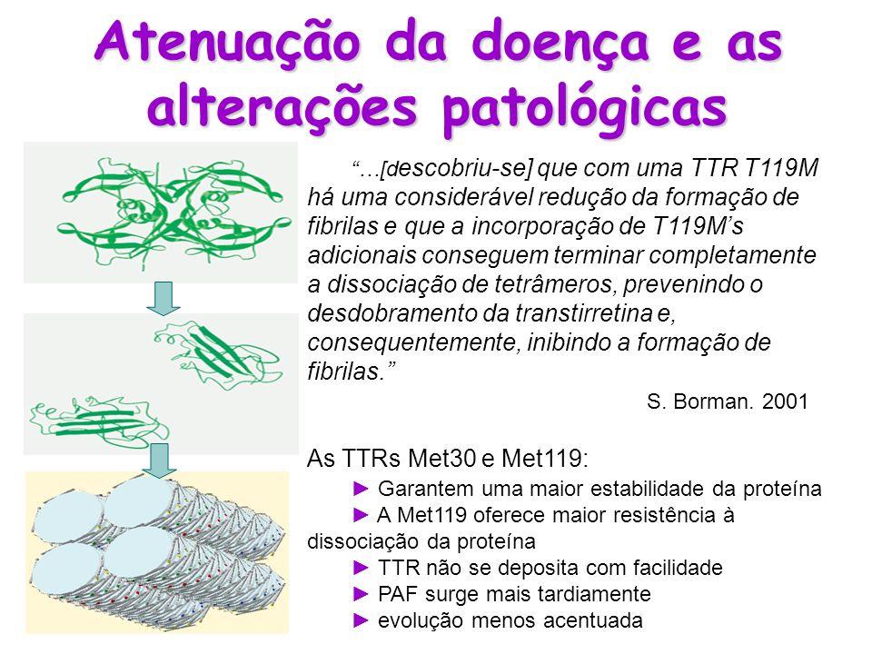 Atenuação da doença e as alterações patológicas …[d escobriu-se] que com uma TTR T119M há uma considerável redução da formação de fibrilas e que a inc