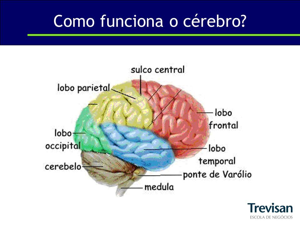 Como funciona o cérebro?