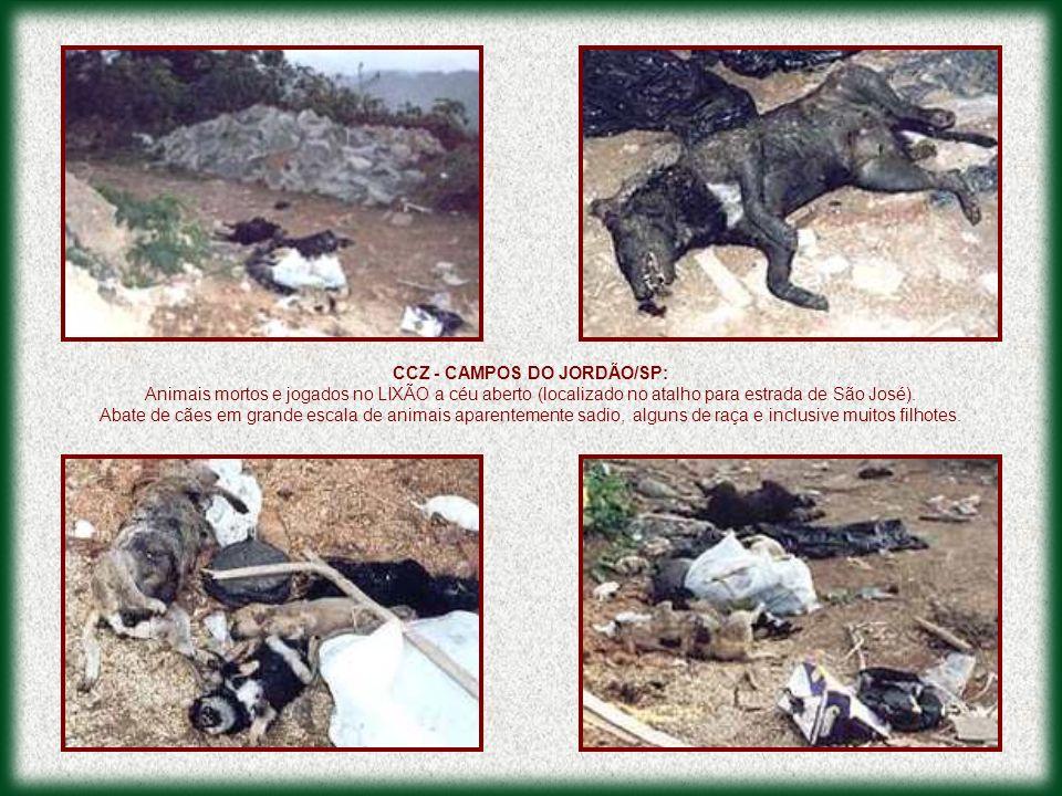 CCZ - CAMPOS DO JORDÃO/SP: Animais mortos e jogados no LIXÃO a céu aberto (localizado no atalho para estrada de São José). Abate de cães em grande esc