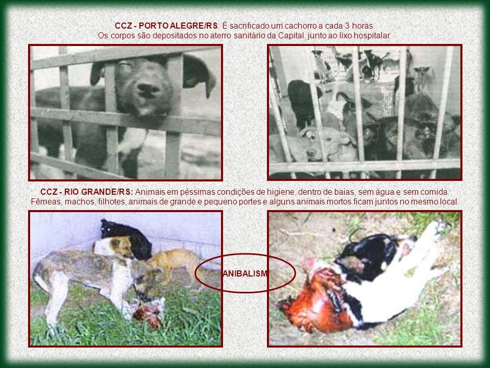 CCZ - PORTO ALEGRE/RS: É sacrificado um cachorro a cada 3 horas. Os corpos são depositados no aterro sanitário da Capital, junto ao lixo hospitalar. C