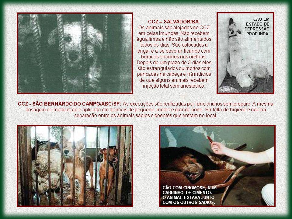 CCZ - SÃO BERNARDO DO CAMPO/ABC/SP: As execuções são realizadas por funcionários sem preparo. A mesma dosagem de medicação é aplicada em animais de pe