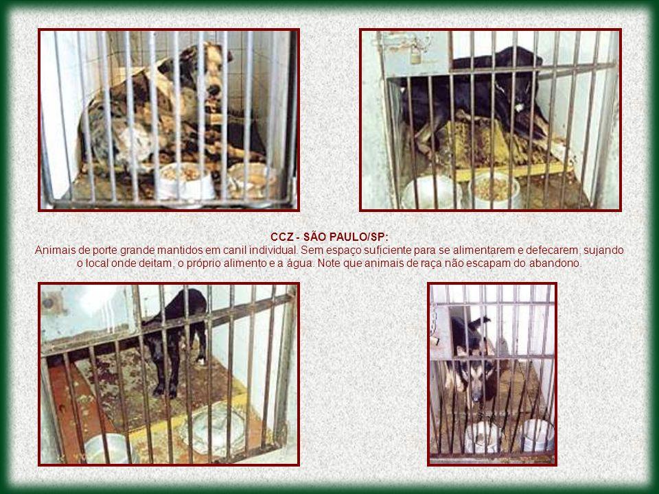 CCZ - SÃO PAULO/SP: Animais de porte grande mantidos em canil individual. Sem espaço suficiente para se alimentarem e defecarem, sujando o local onde