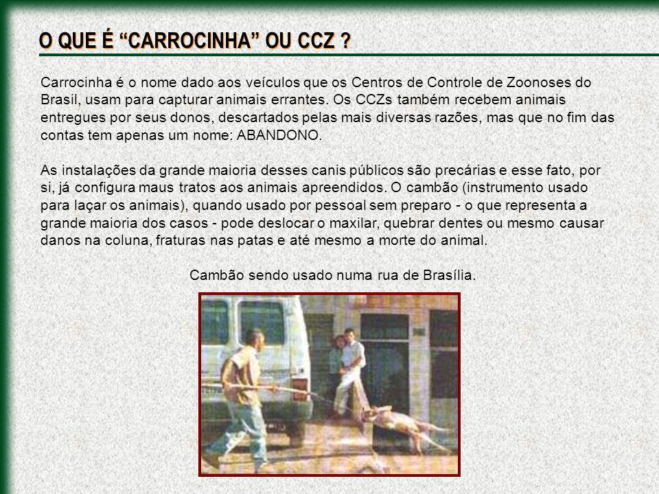 Há mais de 20 (vinte) anos, nos CCZs das grandes cidades, sob o pretexto da prevenção de transmissão de doenças de animais para os seres humanos, praticam-se extermínio sistemático e indiscriminado de cães e gatos, por meios não humanitários.