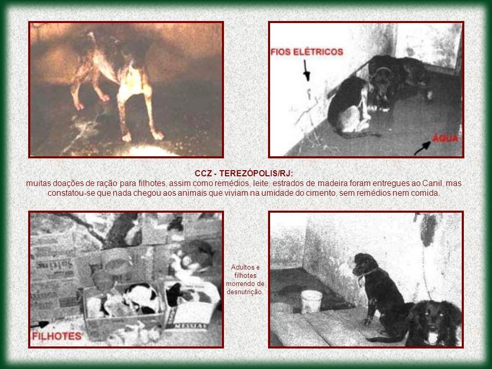 CCZ - TEREZÓPOLIS/RJ: muitas doações de ração para filhotes, assim como remédios, leite, estrados de madeira foram entregues ao Canil, mas constatou-s